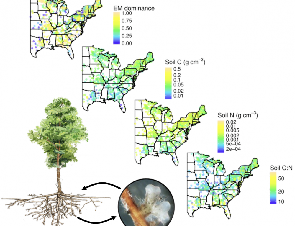 Kai Published in Journal of Ecology